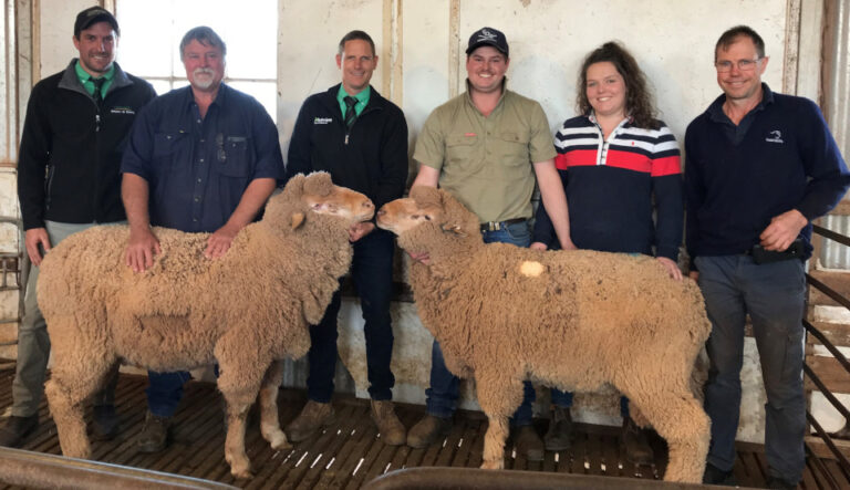Narcoota's 37th Annual Ram Sale a Success