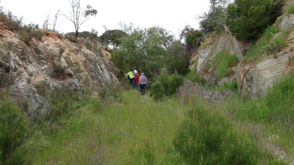 Eudunda to Hampden Rail Line showing how overgrown it has become