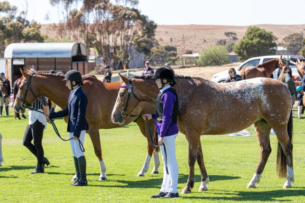 Horses in Action Photo by Robyn Bradbrook Silver Springs Photography