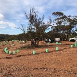 Levi Creek Planting Day Works Toward Restoring Natural Reserve