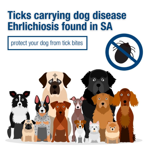 Ticks carrying dog disease Ehrlichiosis found in SA - PIRSA warns banner Image courtesy PIRSA